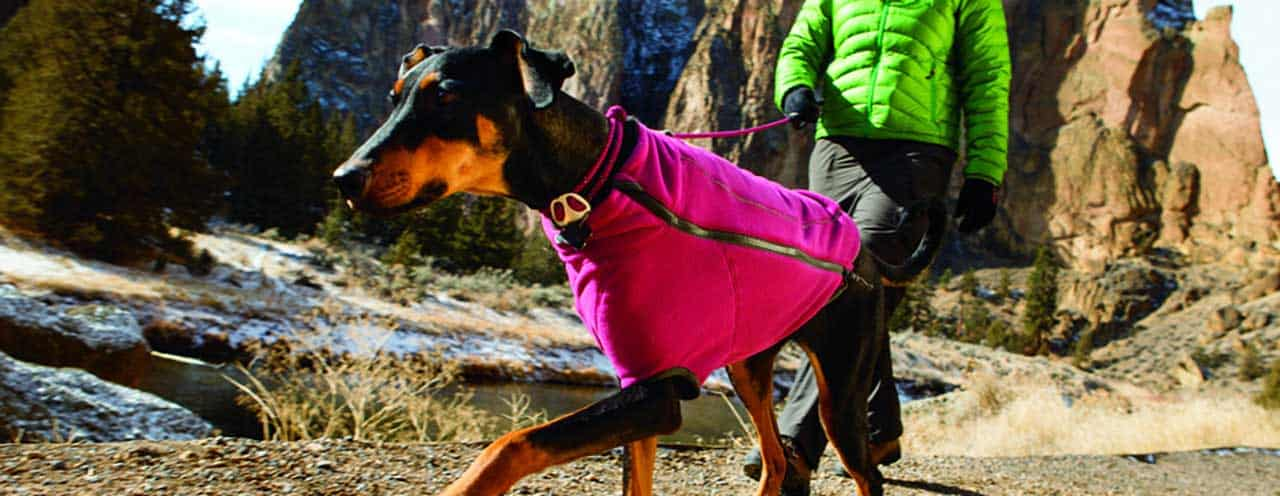 dog wearing jacket for warmth
