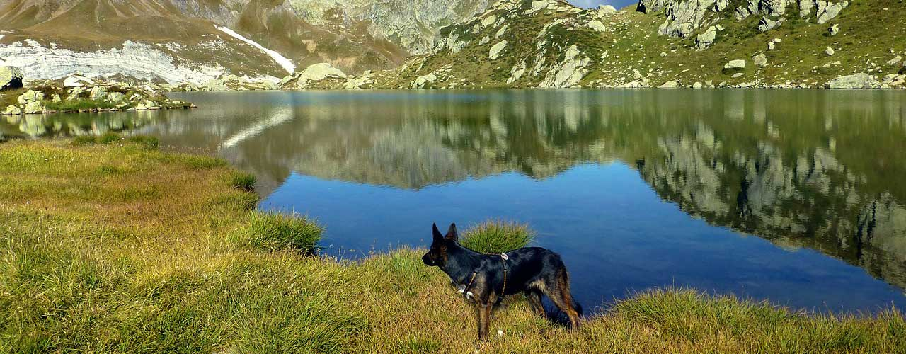 dog hiking in High Country
